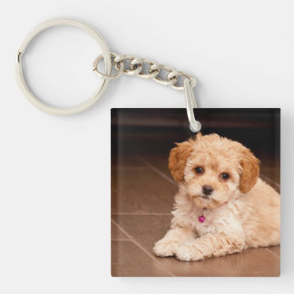Baby Maltese poodle mix or maltipoo puppy dog Double-Sided Square Acrylic Keychain