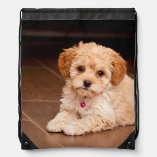 Baby Maltese poodle mix or maltipoo puppy dog Drawstring Bag