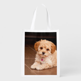 Baby Maltese poodle mix or maltipoo puppy dog Grocery Bag