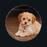 """Baby Maltese poodle mix or maltipoo puppy dog Jelly Belly Candy Tin<br><div class=""""desc"""">Baby Maltese poodle mix or maltipoo puppy dog laying on belly. has a purple bell on his collar.</div>"""