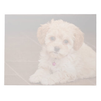 Baby Maltese poodle mix or maltipoo puppy dog Note Pad