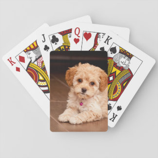 Baby Maltese poodle mix or maltipoo puppy dog Playing Cards