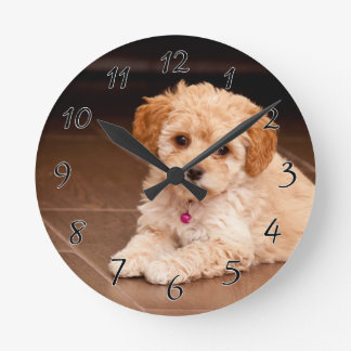 Baby Maltese poodle mix or maltipoo puppy dog Round Clock