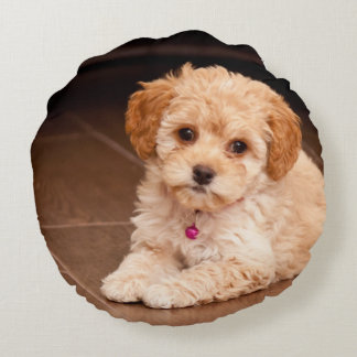 Baby Maltese poodle mix or maltipoo puppy dog Round Pillow