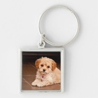 Baby Maltese poodle mix or maltipoo puppy dog Silver-Colored Square Keychain