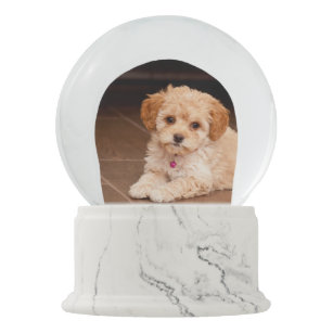 Baby Maltese poodle mix or maltipoo puppy dog Snow Globe