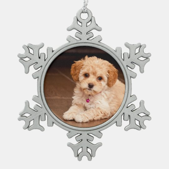 Baby Maltese poodle mix or maltipoo puppy dog Snowflake ...