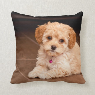 Baby Maltese poodle mix or maltipoo puppy dog Throw Pillow