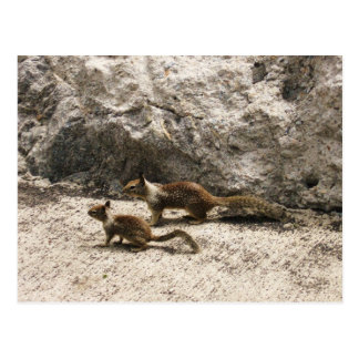 Baby & Mama Squirrel Postcard