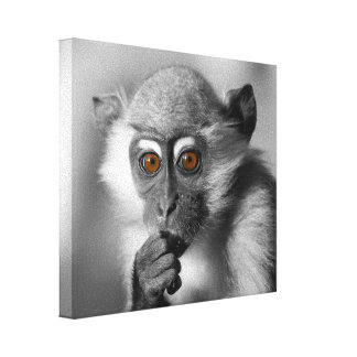 Baby Mangabey Monkey Canvas Print
