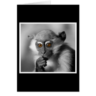 Baby Mangabey Monkey Card