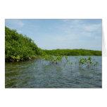 Baby Mangrove Trees Blank Card