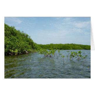Baby Mangrove Trees Caribbean Nature Card