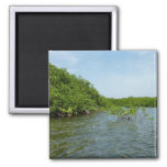 Baby Mangrove Trees Caribbean Nature Magnet