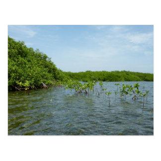 Baby Mangrove Trees Caribbean Nature Postcard