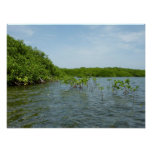 Baby Mangrove Trees Caribbean Nature Poster