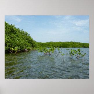 Baby Mangrove Trees Caribbean Nature Poster