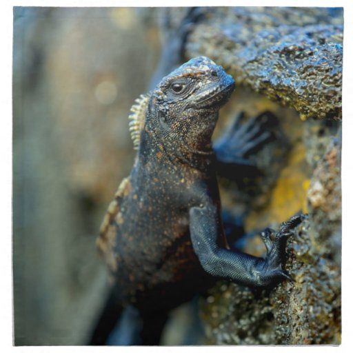 Baby marine iguana Galapagos Islands Napkin