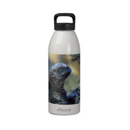 Baby marine iguana Galapagos Islands Water Bottle