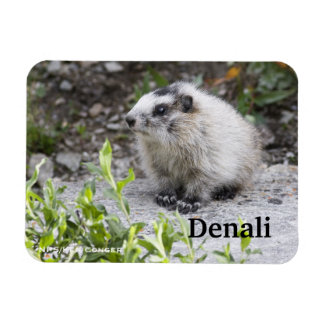 Baby Marmot, Denali Magnet
