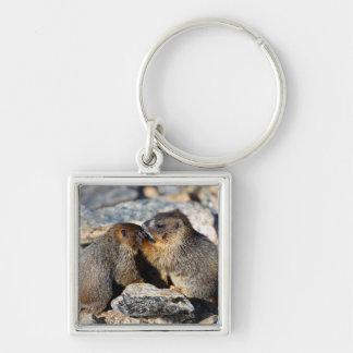 Baby Marmots Keychain