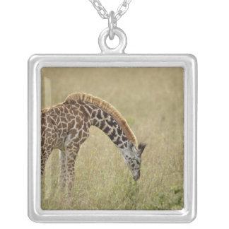 Baby Masai Giraffe, Giraffa camelopardalis Necklace