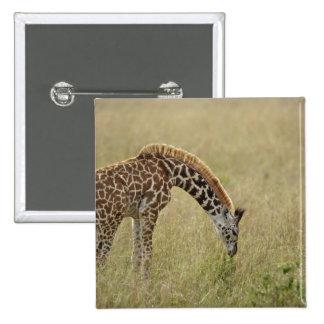 Baby Masai Giraffe, Giraffa camelopardalis Pinback Button