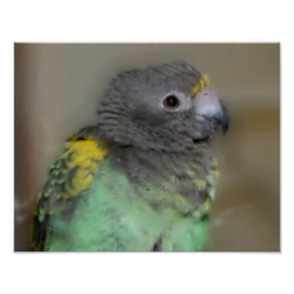Baby Meyers Parrot Photo Painting Print