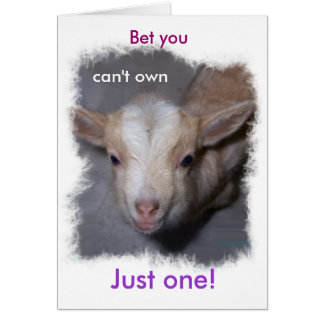 Baby Miniature Goat card