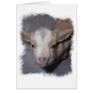 Baby Miniature Goat card to Customize