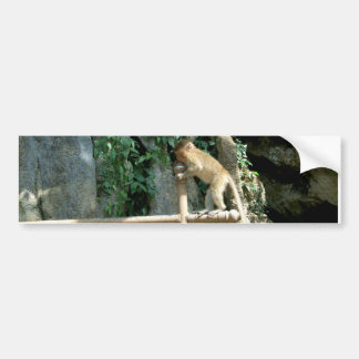 Baby Monkey Car Bumper Sticker