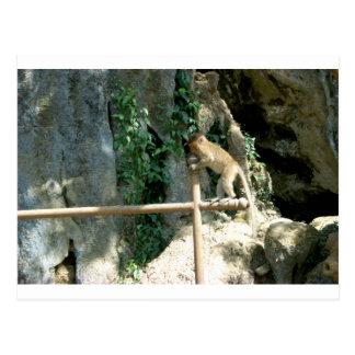 Baby Monkey Postcard