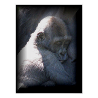 Baby Monkey Posters