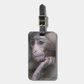 Baby monkey staring. luggage tag