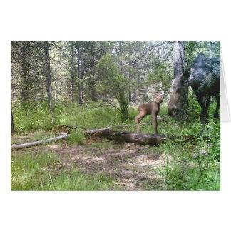 Baby  moose birthday card