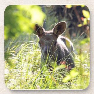 Baby Moose Drink Coaster