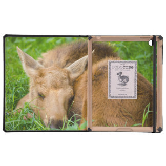 Baby Moose Sleeping In Grass, Baby Animal iPad Case
