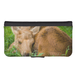 Baby Moose Sleeping In Grass, Baby Animal iPhone 5 Wallet Case