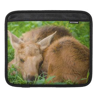 Baby Moose Sleeping In Grass, Baby Animal Sleeve For iPads