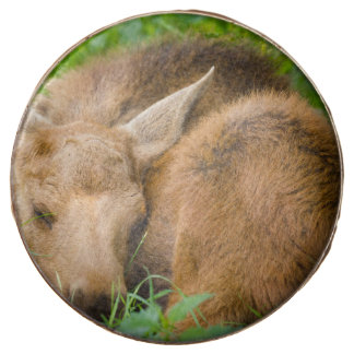 Baby Moose Sleeping In Grass, Baby Animal Chocolate Dipped Oreo