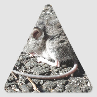 Baby Mouse Triangle Sticker