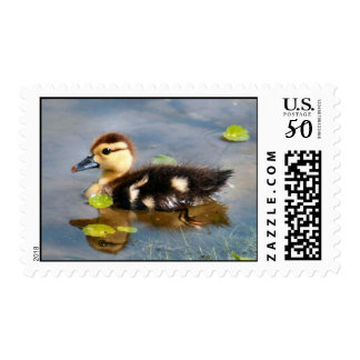 Baby Muscovy Duck Postage Stamps