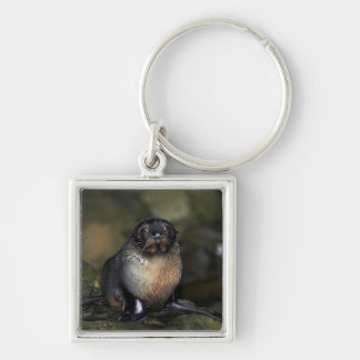 Baby New Zealand Fur Seal Keychain