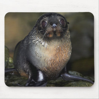 Baby New Zealand Fur Seal Mouse Pad