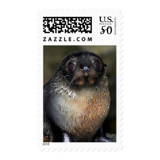 Baby New Zealand Fur Seal Postage