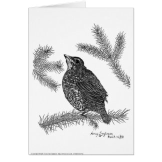 Baby North American Robin Pen and Ink Greeting Card