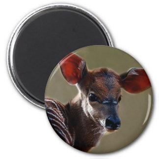 Baby Nyala Deer looking Refrigerator Magnet