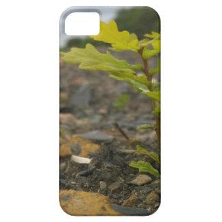 Baby Oak iPhone SE/5/5s Case