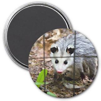 Baby Opossum Fridge Magnet
