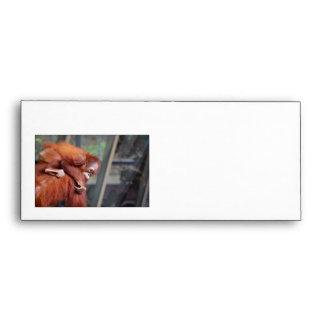 Baby Orangutan Envelope